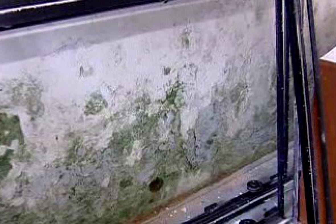 Zeď napadená dřevomorkou
