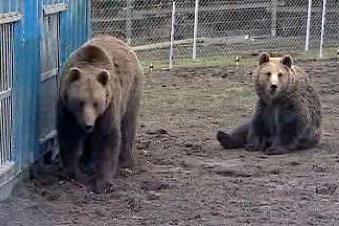 Medvědí sourozenci