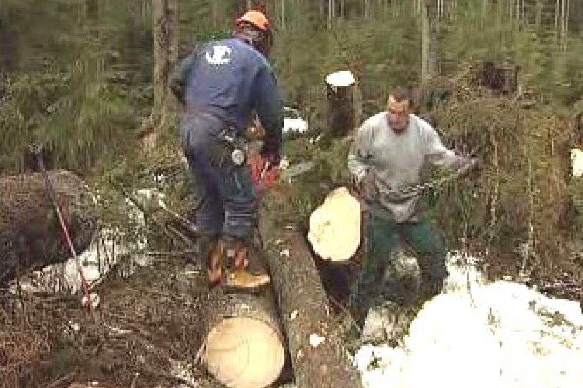 Dřevorubci na Šumavě