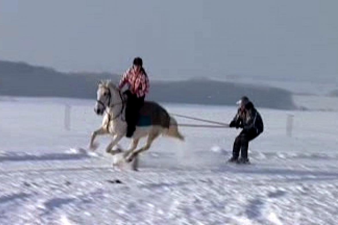 Horse skijöring