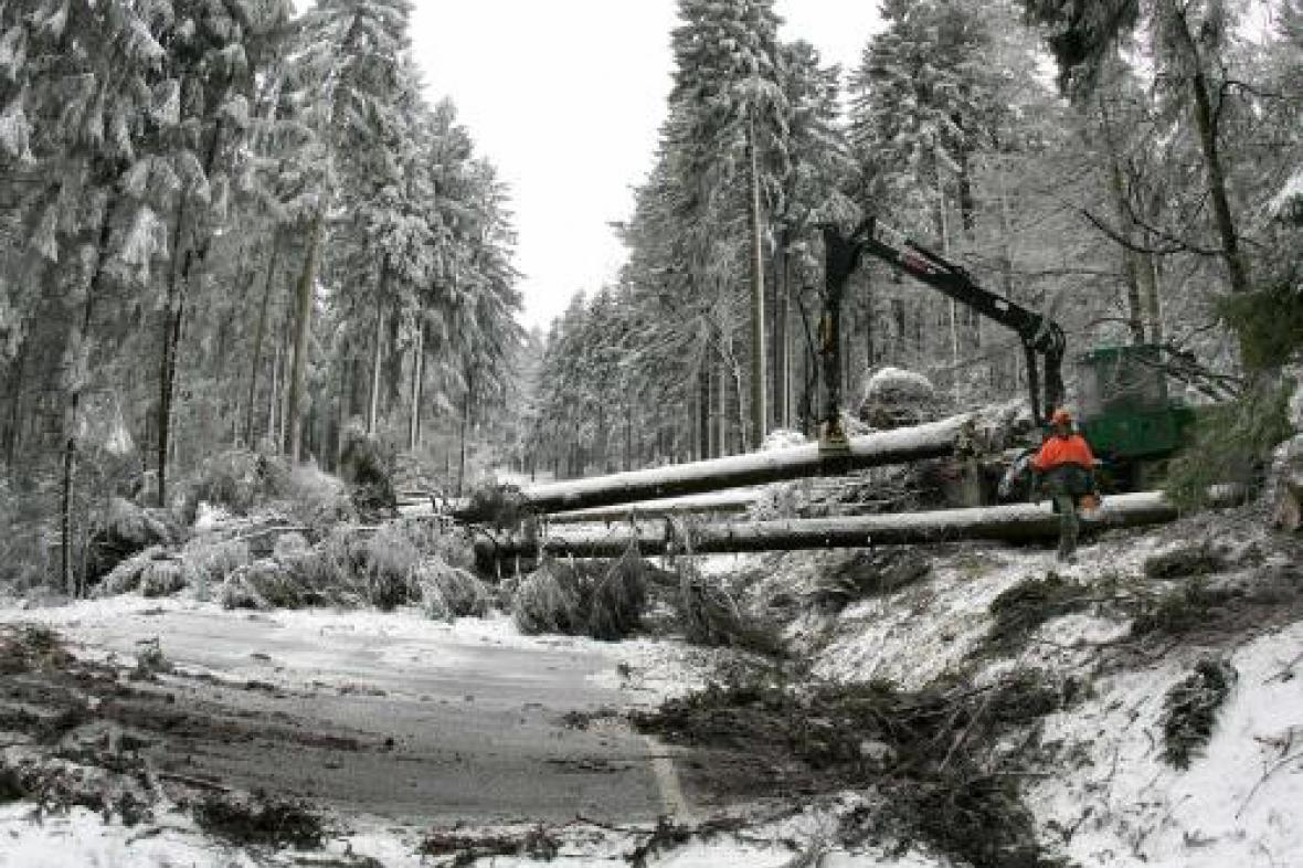 Spadlé stromy