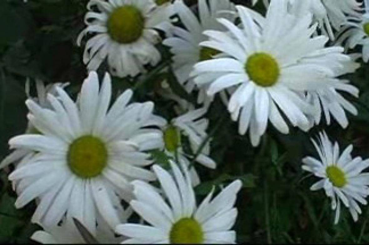 Květinová módní přehlídka