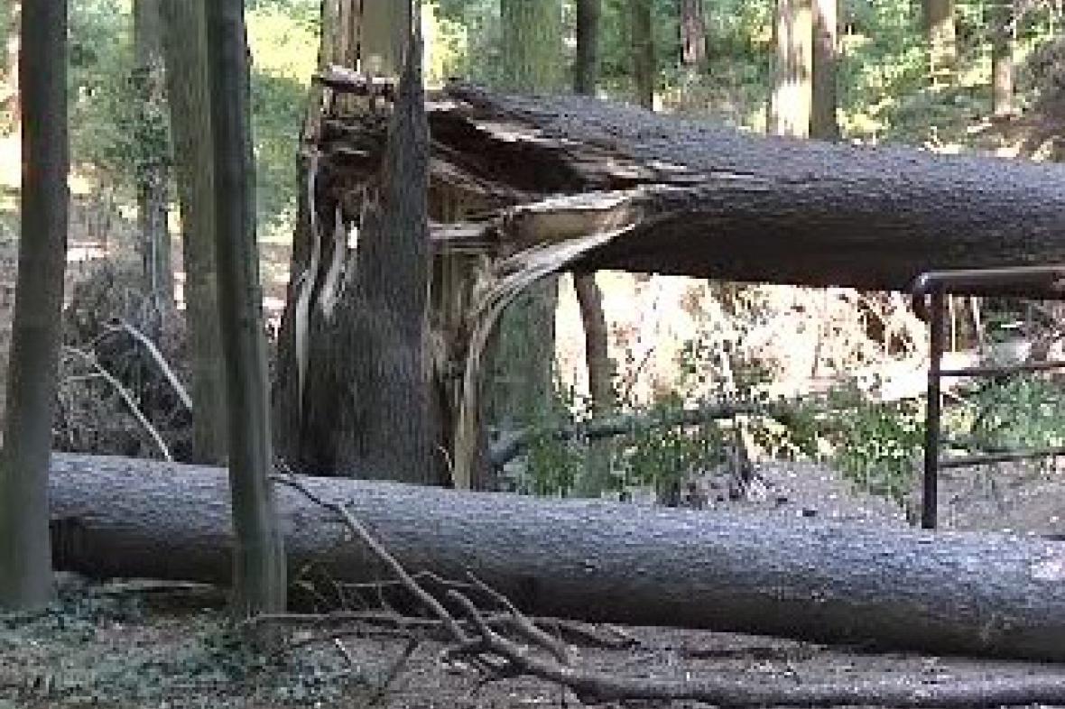 Lesní kalamita