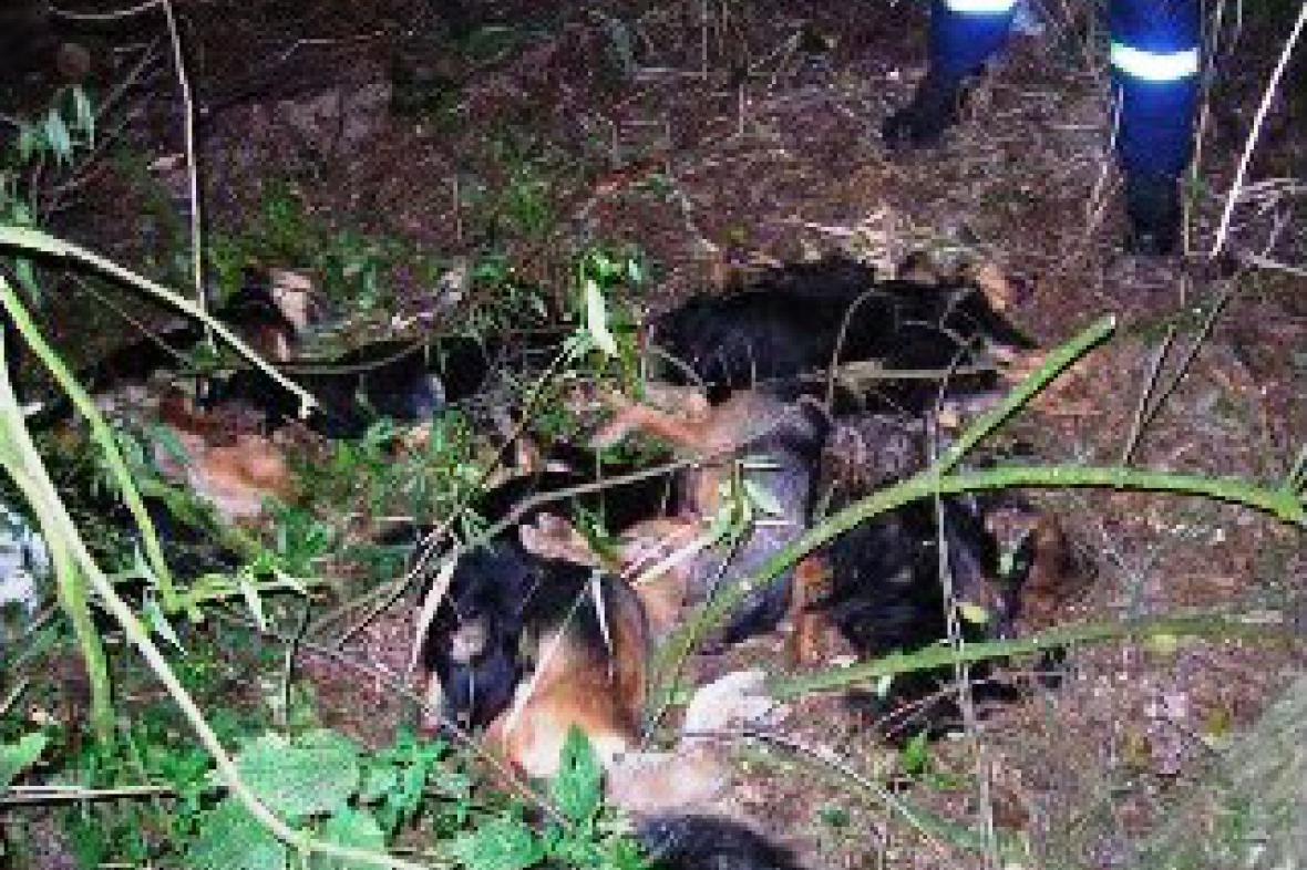 Mrtvoly psů