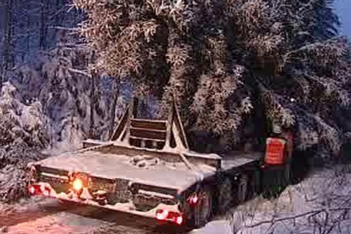 Vánoční strom pro Prahu