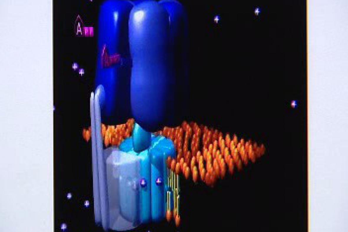 ATPázová pumpa mitochodrie