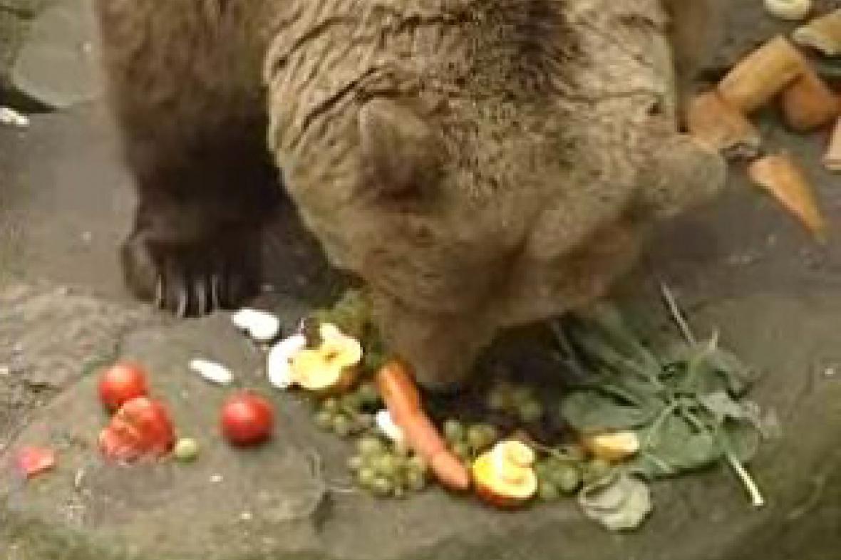 Medvědí hostina