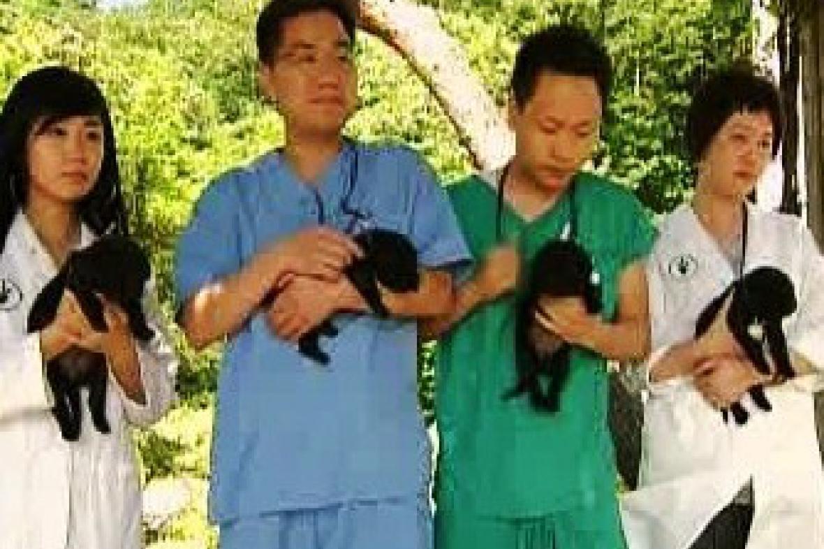 V Jižní Koreji klonovaná šťeňata labradora