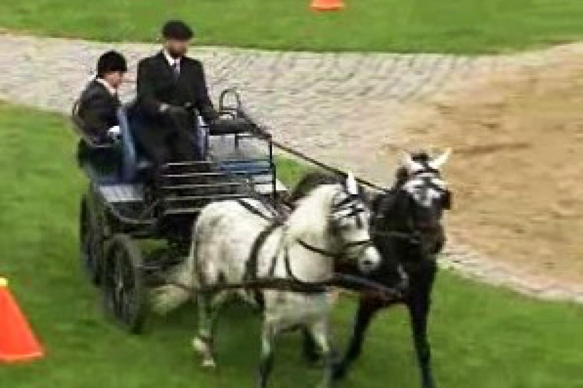 Jízda spřežení na Dni koní v Benicích