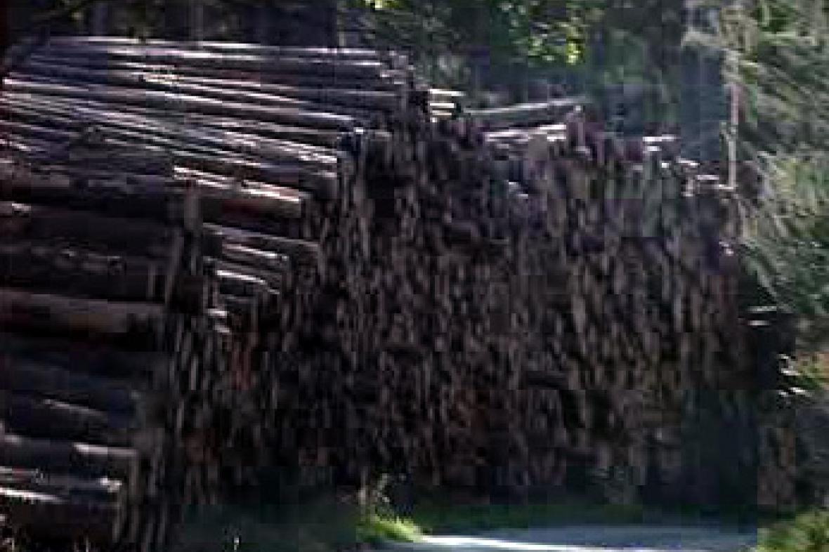 Hranice dřeva