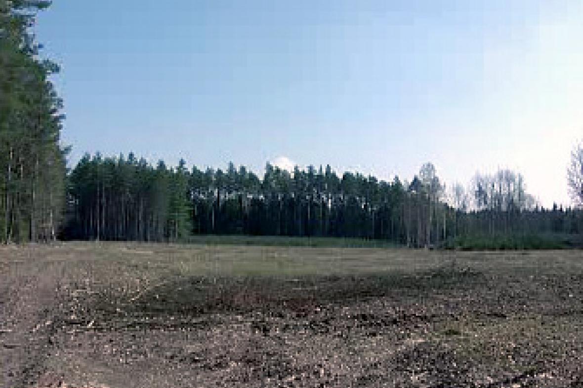 Vykácecený les