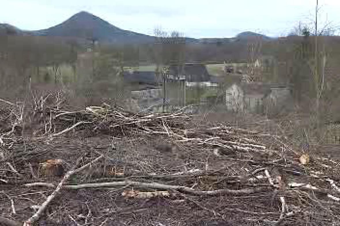 Vykácené dřevo na českolipsku
