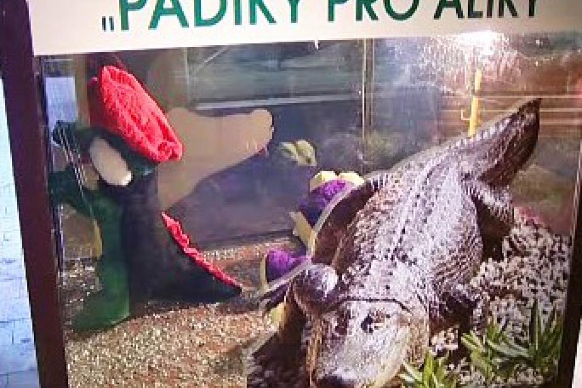 Padesátníky pro aligátory