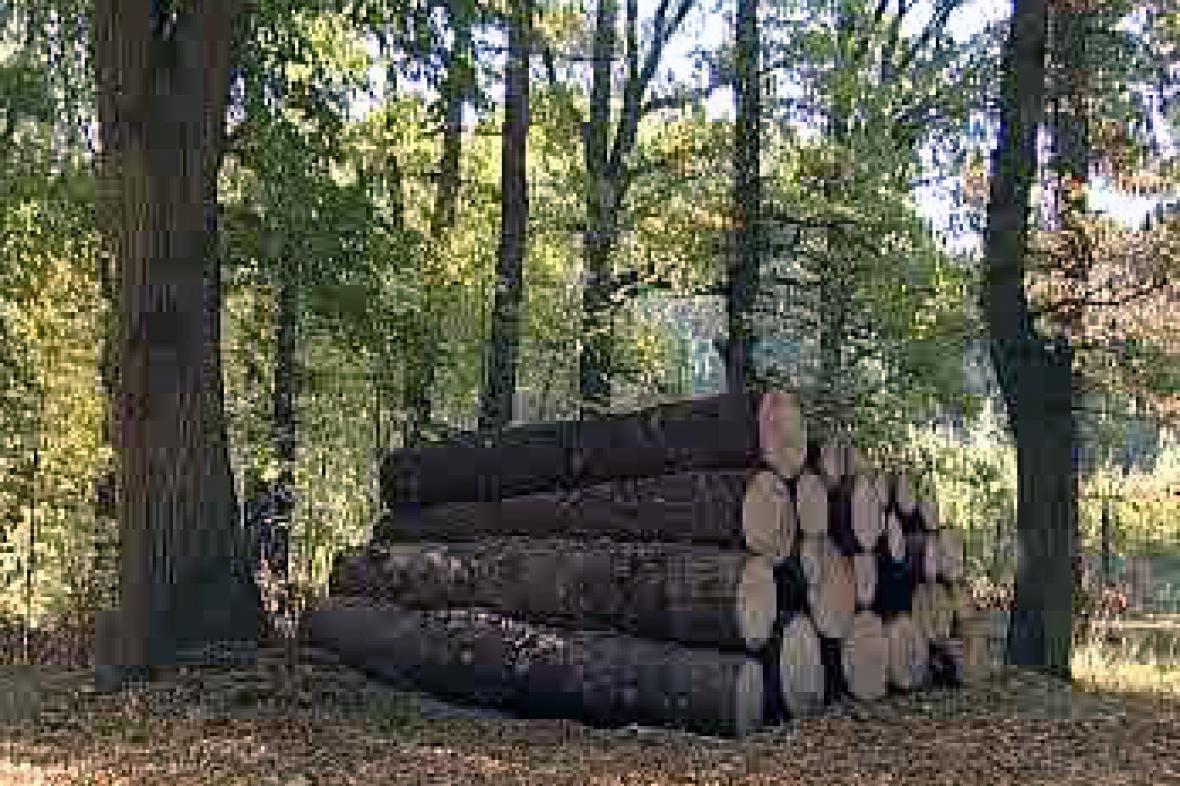 Pokácené stromy v chudenické rezervaci