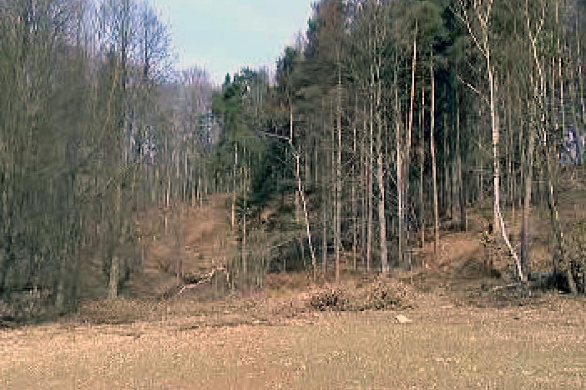 Vykácený les u Podmoklan