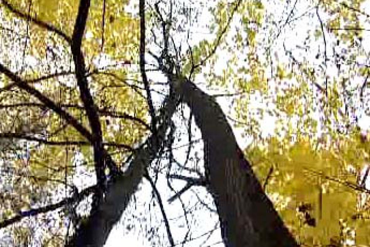 Listnaté stromy