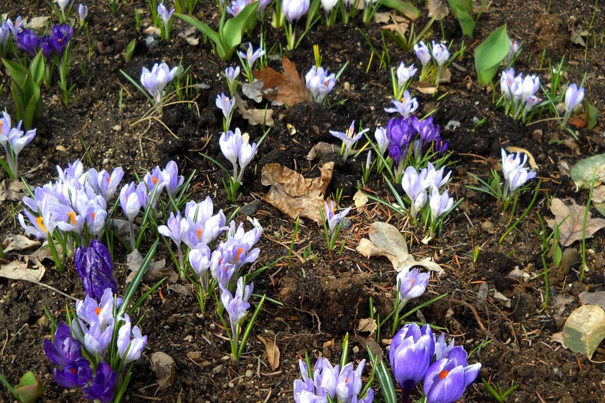 Jaro se ozve s teplejšími dny