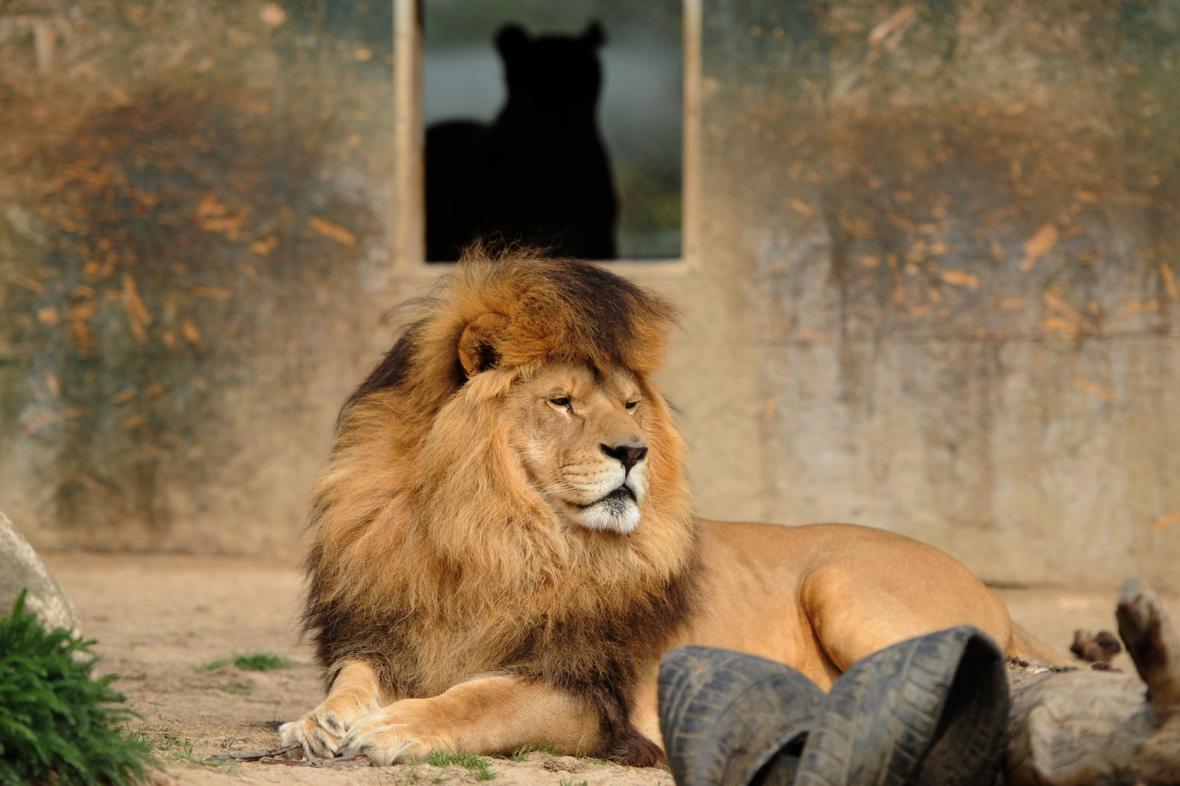 Táborský lev