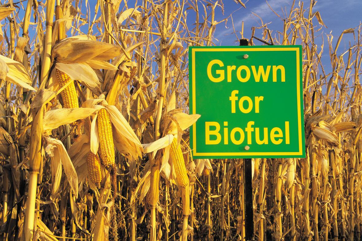 Kukuřičné biopalivo
