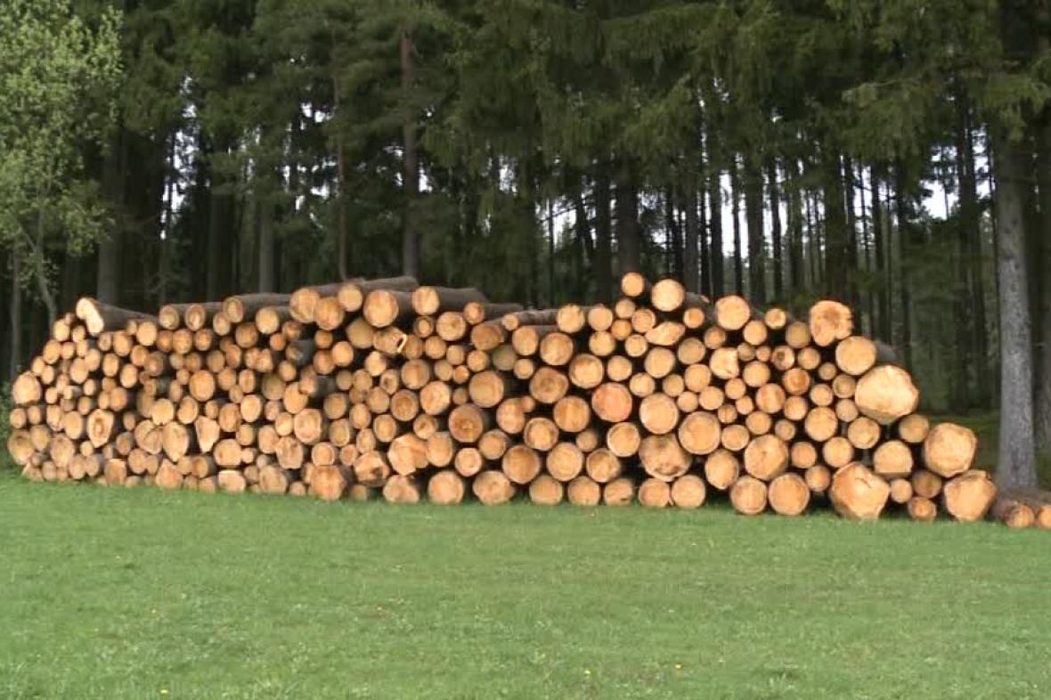 Nové Město prodává dřevo
