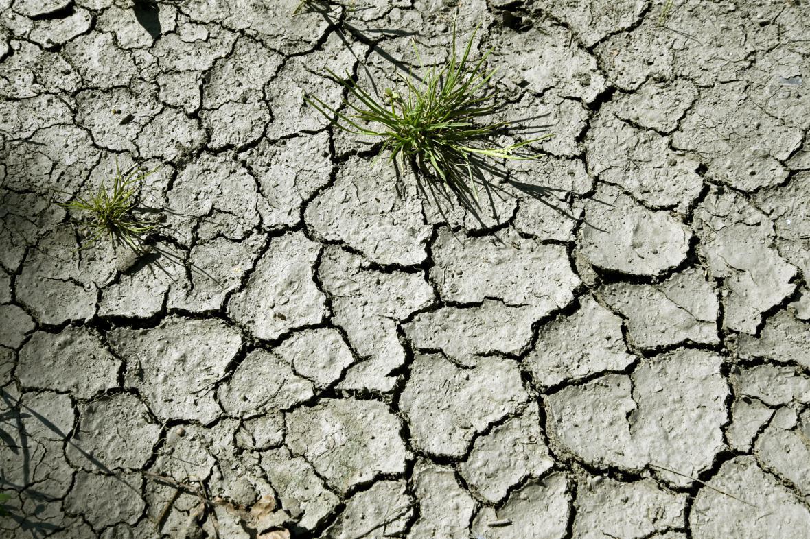 Pěstitele trápí velké sucho