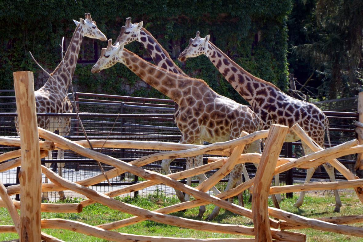 Africké safari v olomoucké zoo na Svatém Kopečku