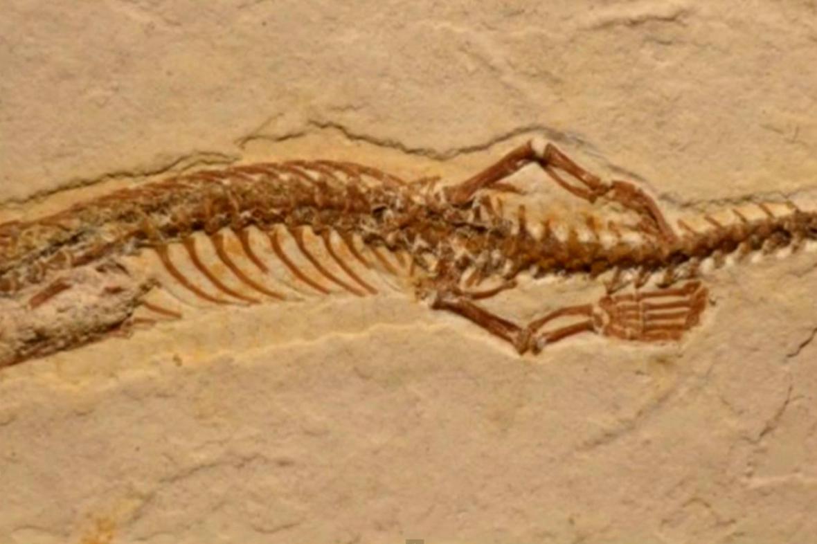 Fosilie čtyřnohého hada