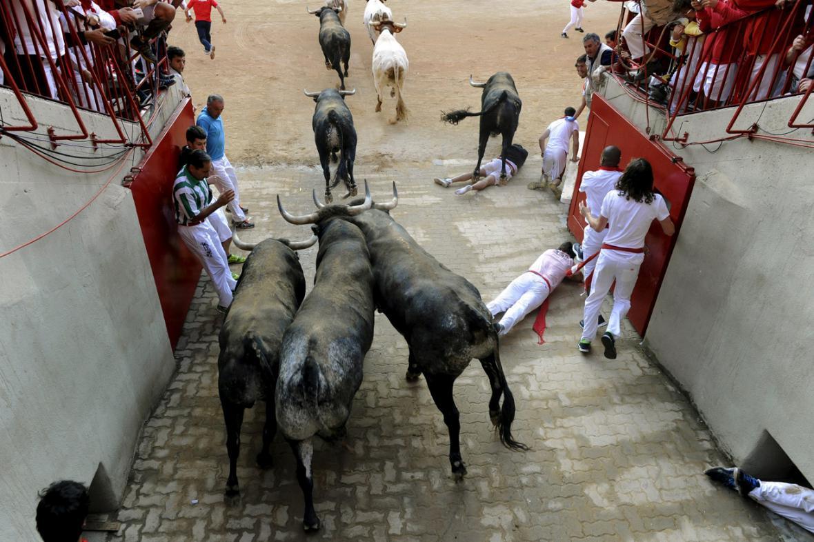 Tradiční běh s býky v Pamploně