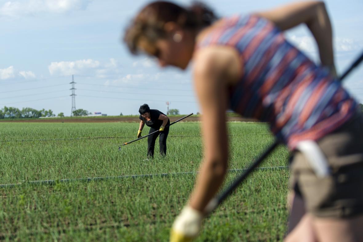 Práce v zemědělství