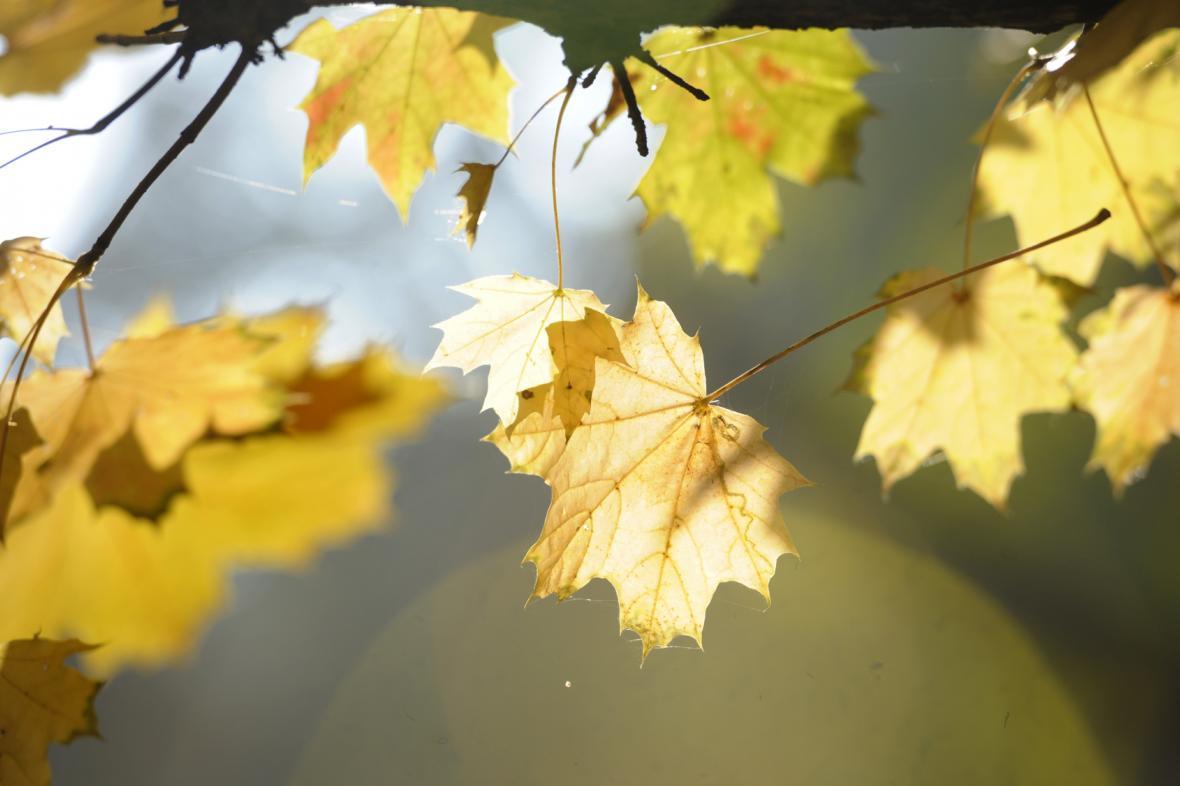 Slunečný podzim