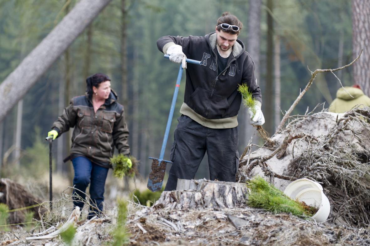 Lesní dělníci