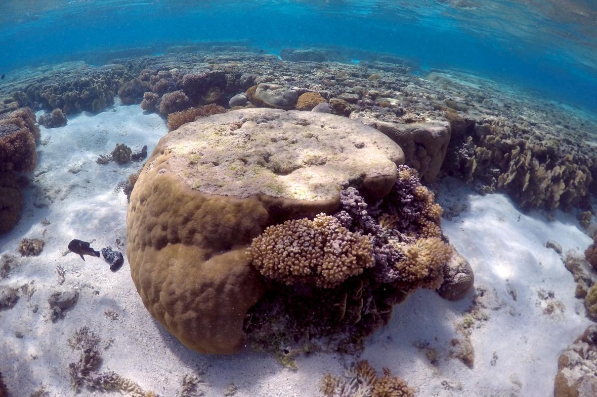 Oteplování oceánů a zvyšování jejich kyselosti ohrožuje na životě korálové útesy