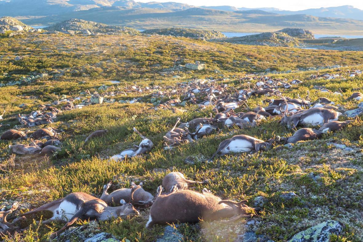Snímek uhynulých losů