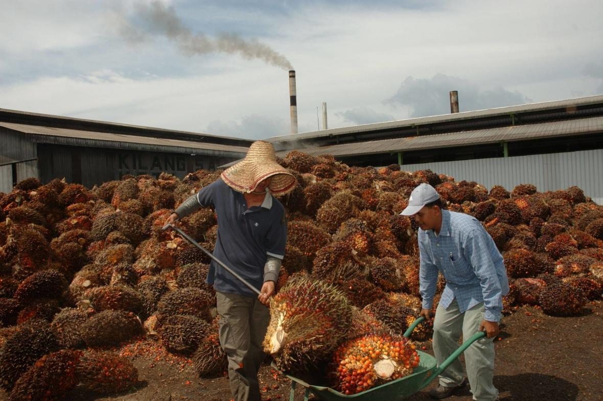 Palmový olej - od stromu k popelu