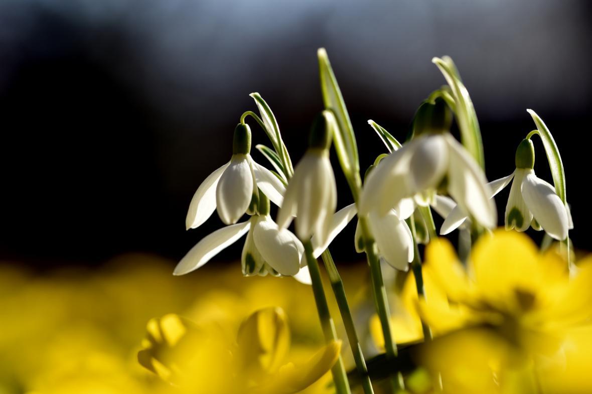 Jaro se nezadržitelně blíží