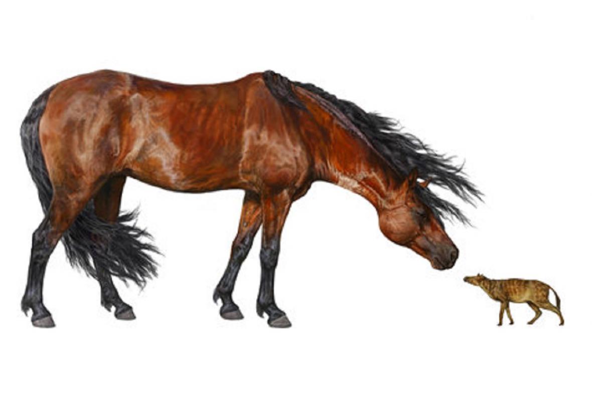 Dnešní a pravěký kůň