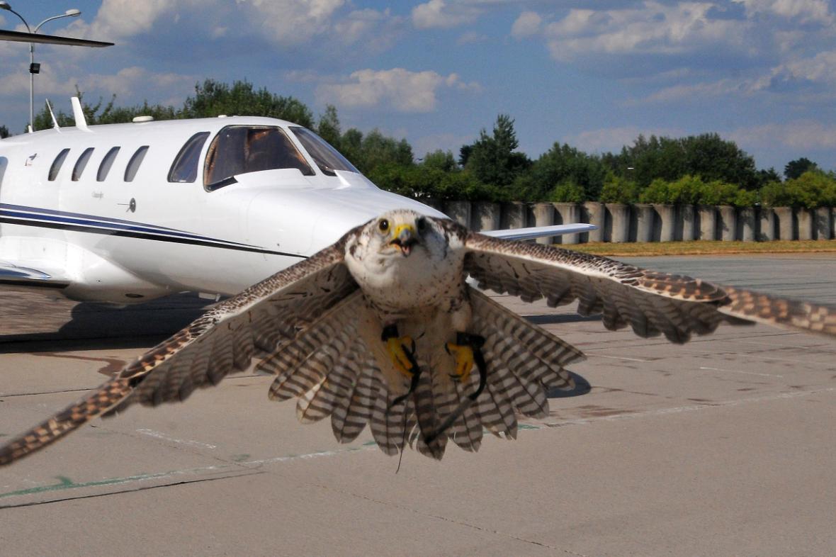 Chce velkého ptáka