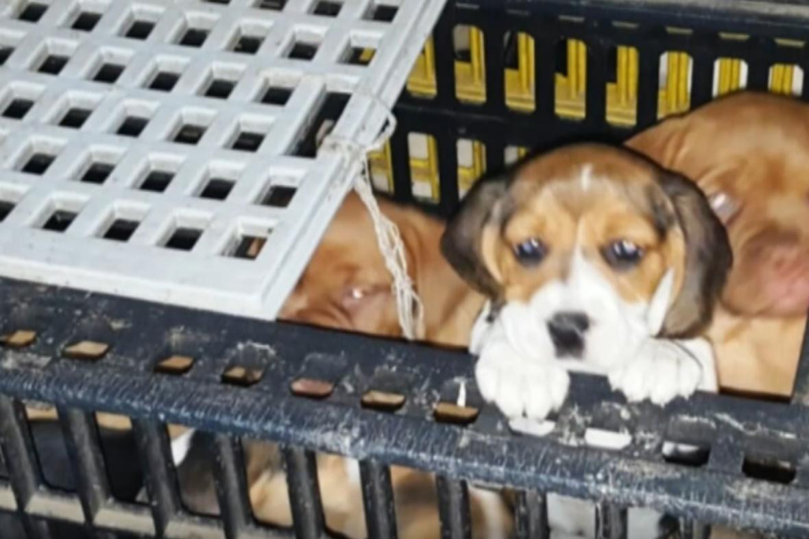 Zadržení psi