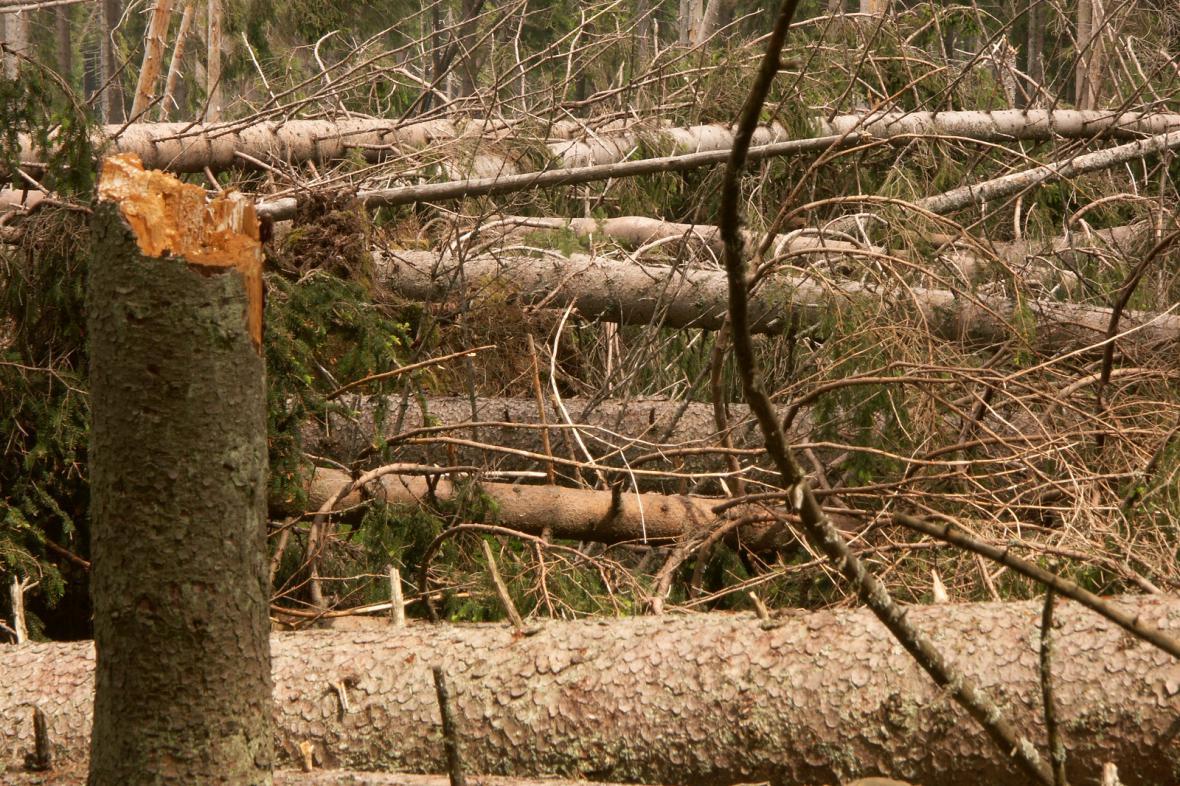 Kritická rizika pro lesní systémy