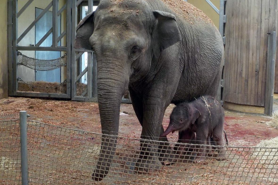 Sloní matka se sloním mládětem