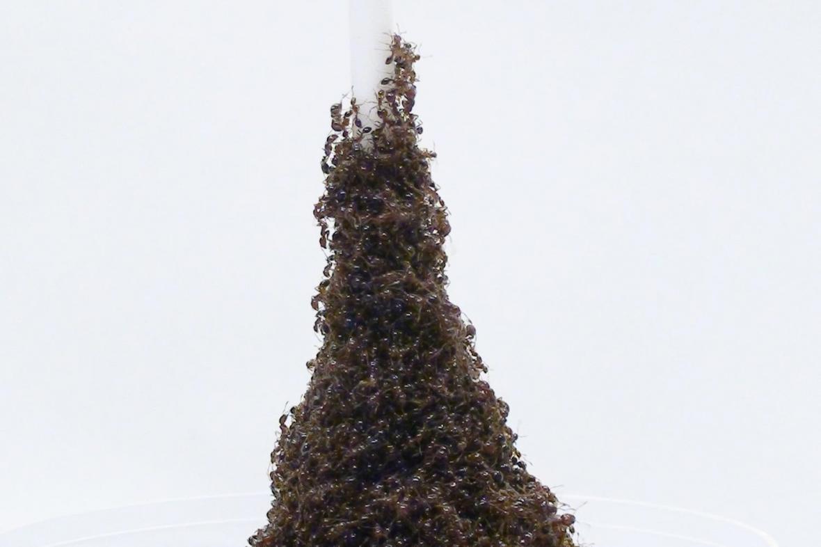 Mravenčí Eiffelovka