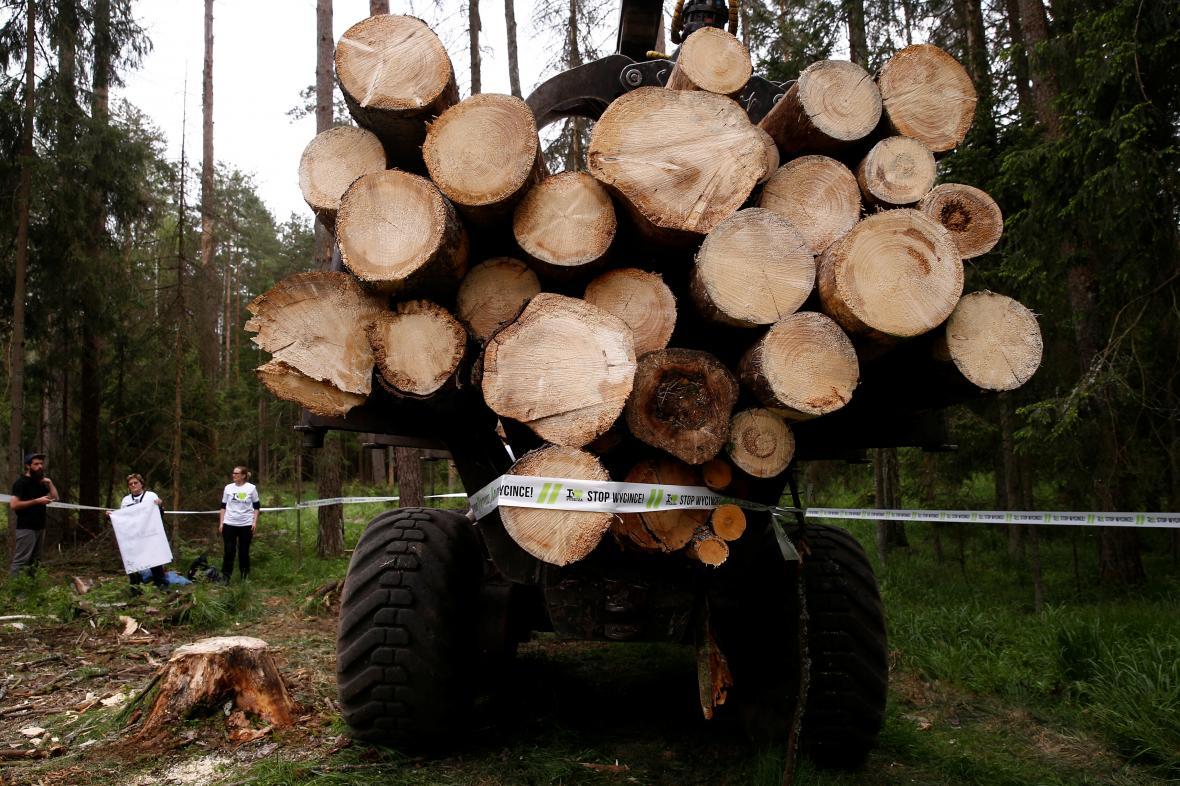 Kácení v Bělověžském pralese