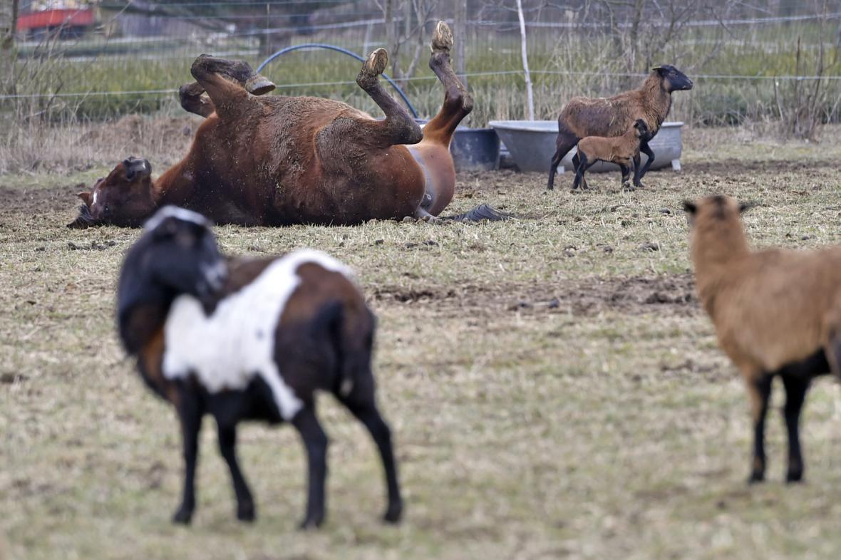Zvířata v záchytné stanici