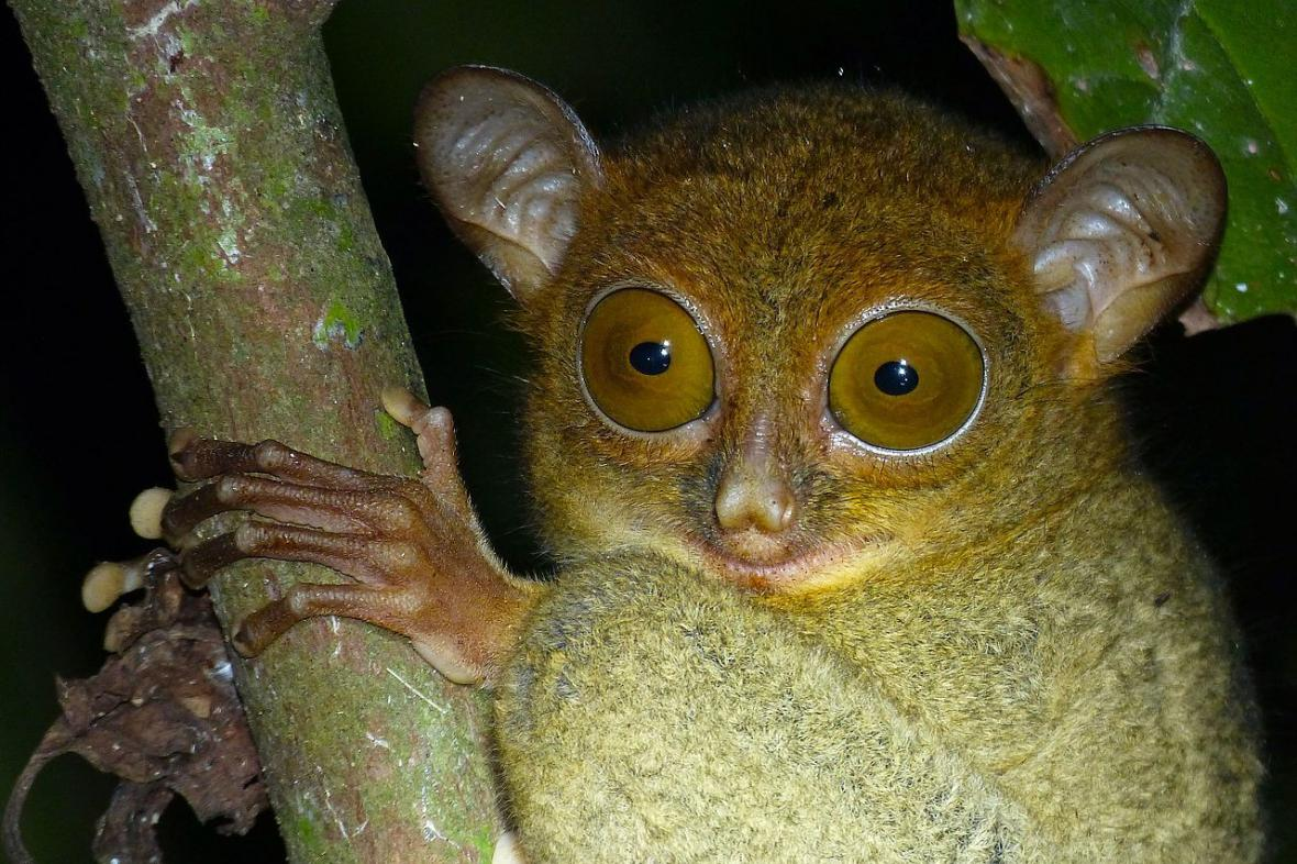 Většina savců jsou dodnes noční tvorové - například nártoun