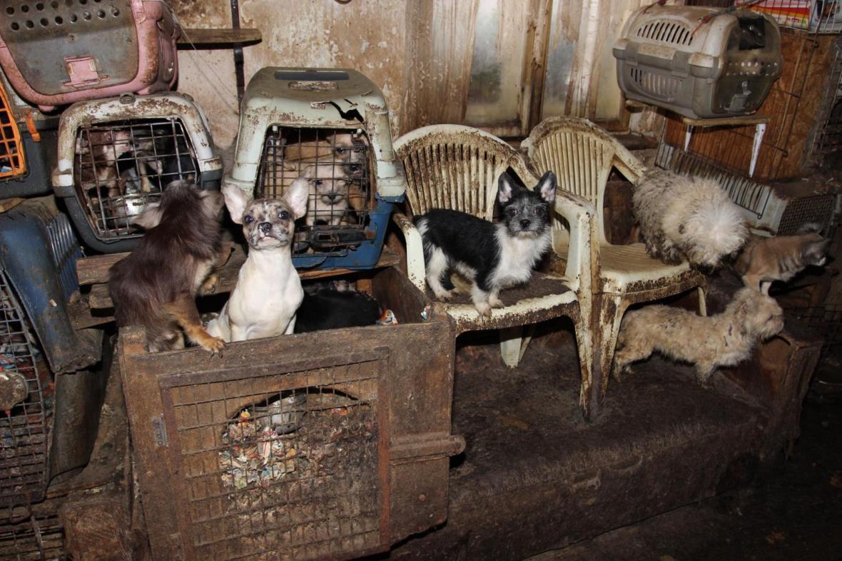 V domě v Kamenici nad Lipou živořily desítky psů