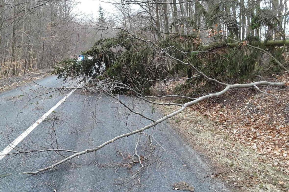 Strom na silnici