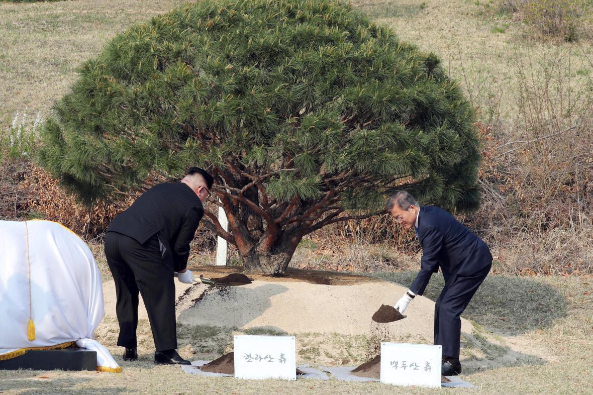 Kim Čong-un a Mun Če-in zasazují v demilitarizovaném pásmu borovici