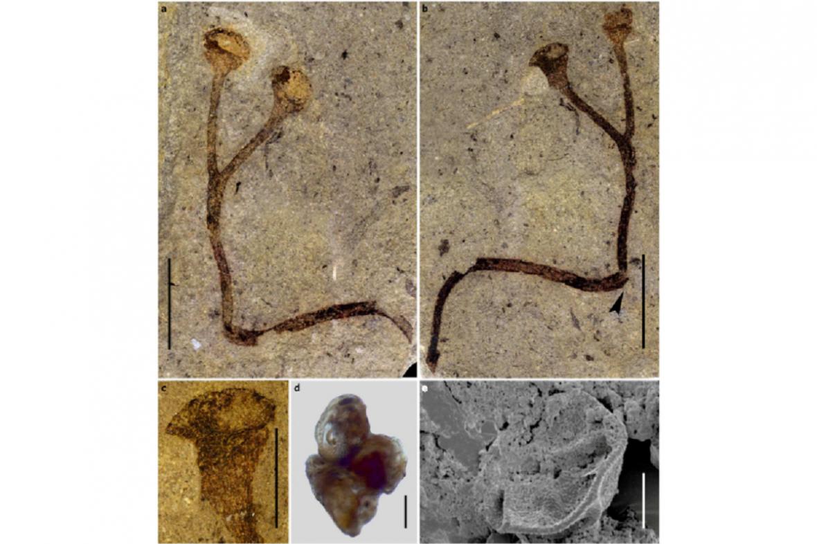 Suchozemská rostlina stará 432 milionů let
