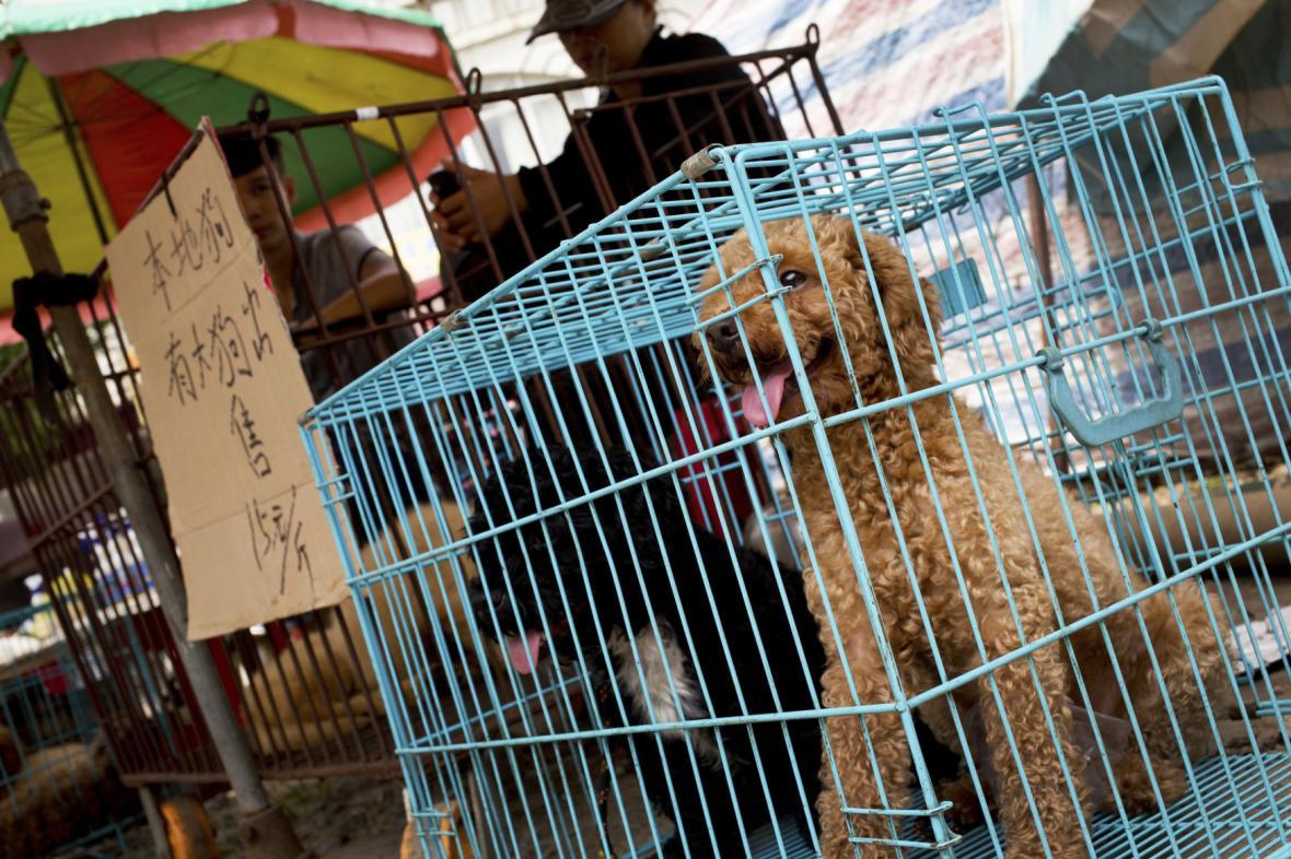 Psi na kulinárním festivalu v Číně
