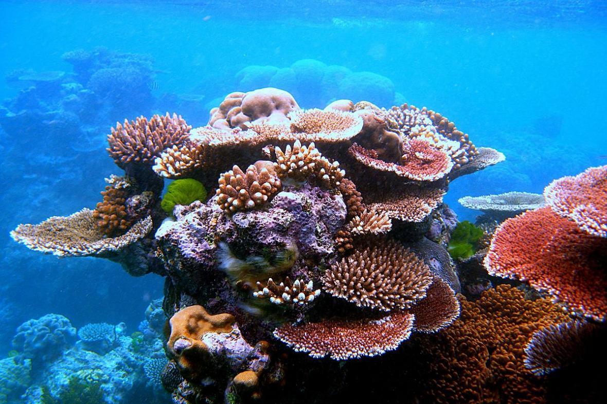 Korálový útes u Belize